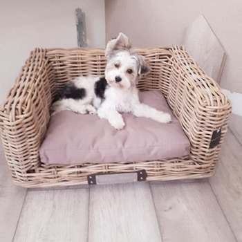Biewer yorkshire terrier Macy